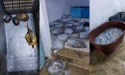Caen contrabandistas de especies en veda; tenían un cocodrilo vivo
